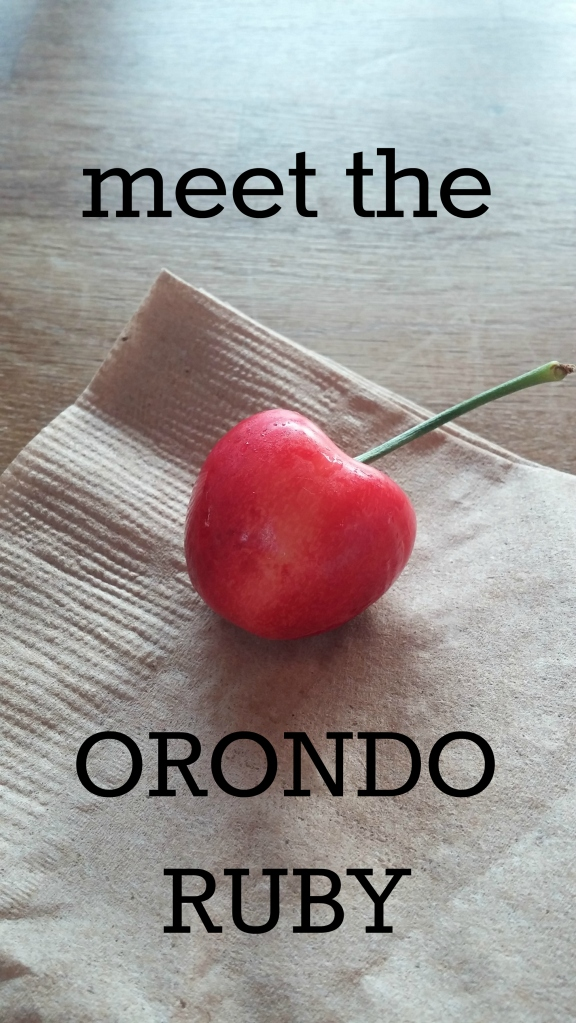 Orondo Ruby jazzy